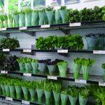 まるで花屋のような店内 壁一面に新鮮な季節の野菜
